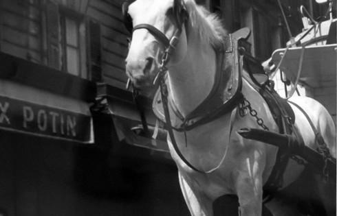 Тягловая лошадь