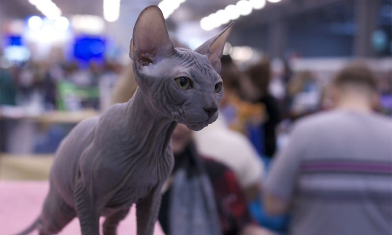 Кэтсбург  -волшебный мир кошек и котов