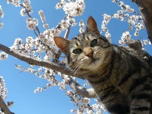 О чем думают кошки и что они думают про нас?