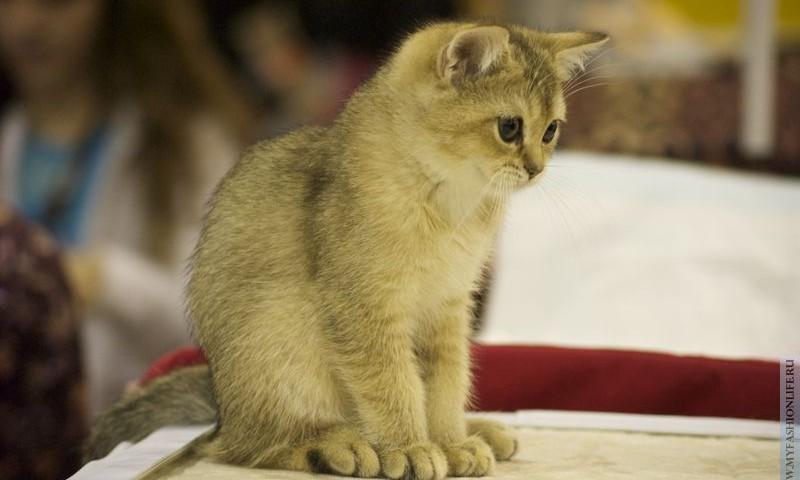 Фотографии кошек и котов