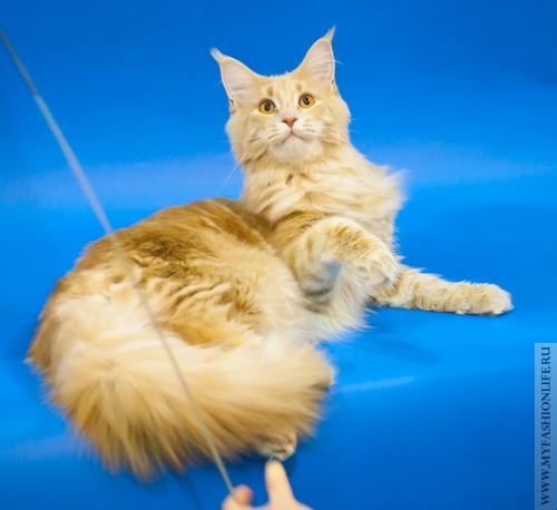 Фотограф для кошки – адский труд. Модная фотосессия для кошки